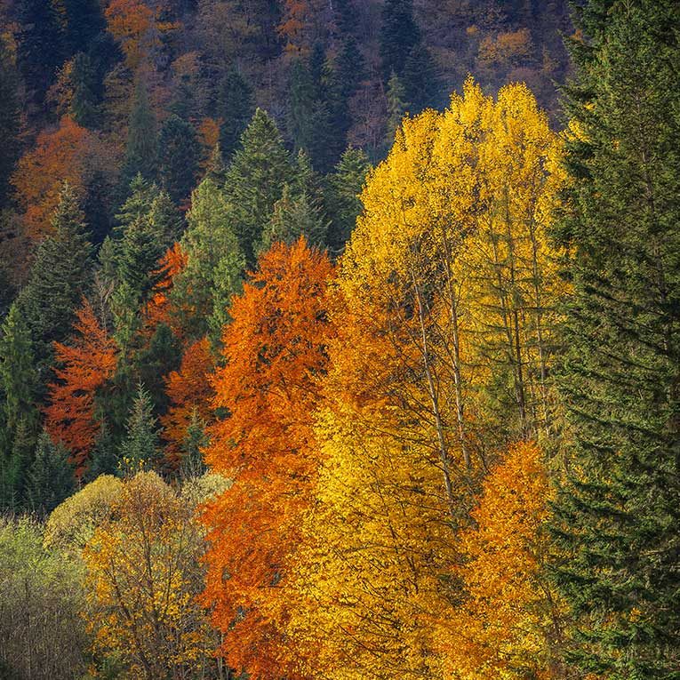 Trees with Fall colors